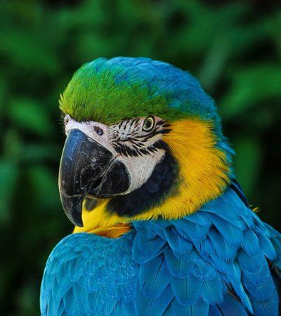 macaw-320006_1920